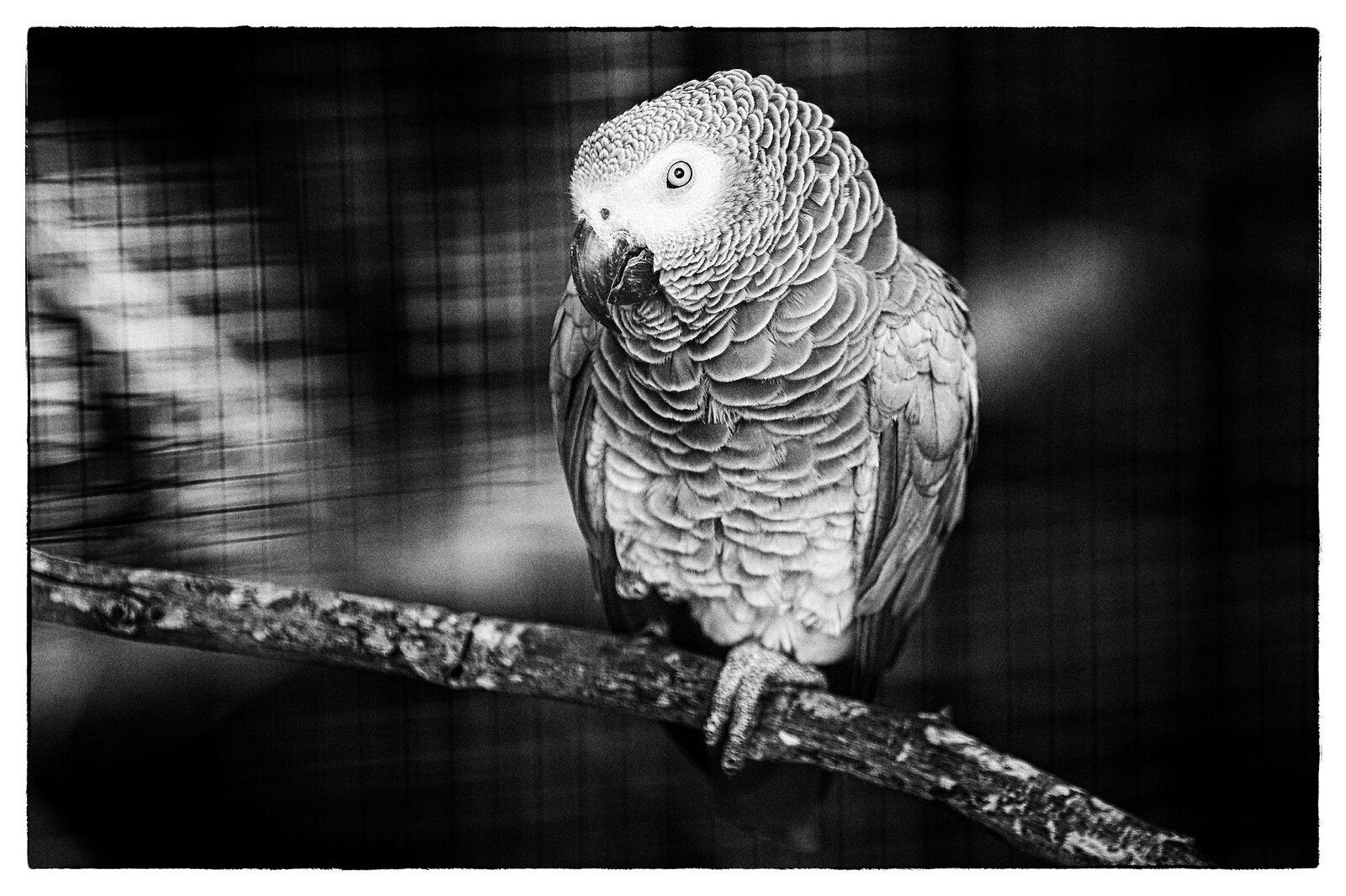 08-16-2020_zoo_NZ6_7118-Edit.jpg