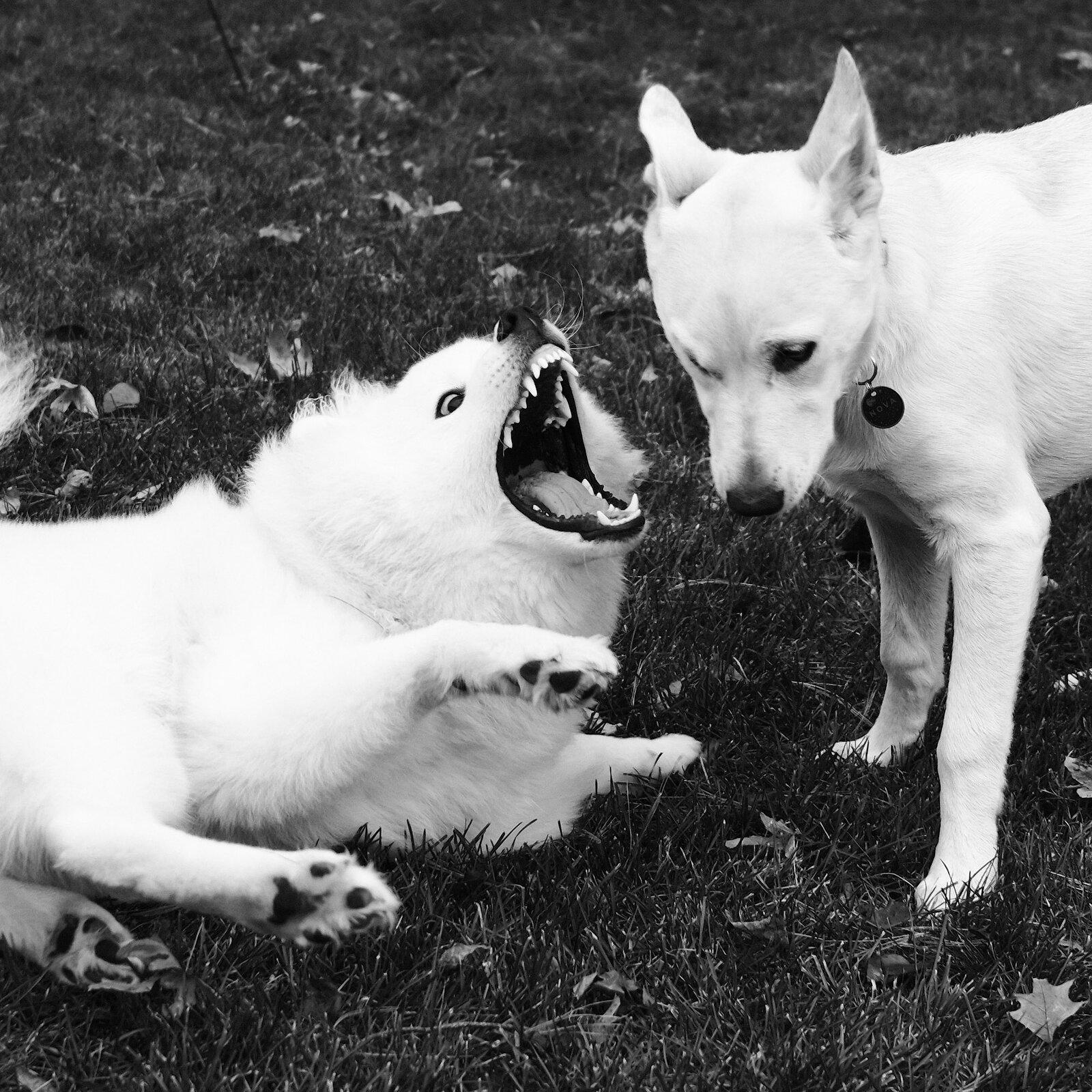 11-26-2020_thxgiving_dogs_X1008859.jpg