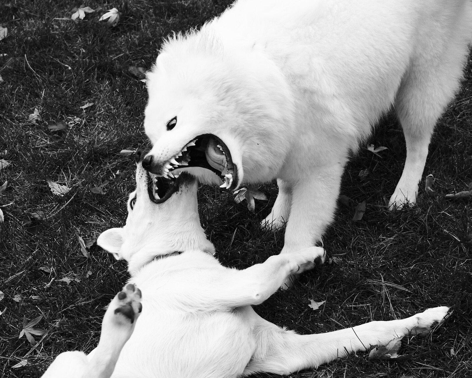 11-26-2020_thxgiving_dogs_X1008892.jpg
