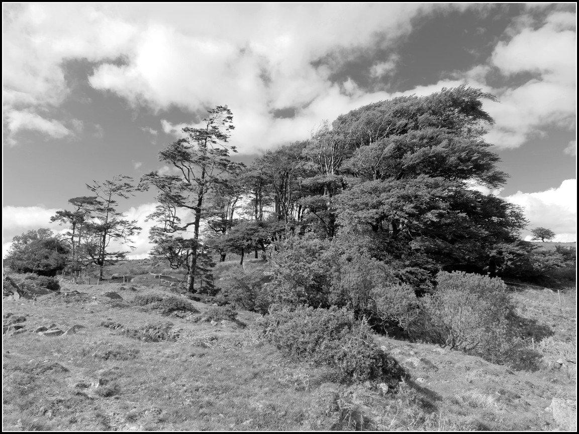 150529-1000517-Leica-mono.jpg