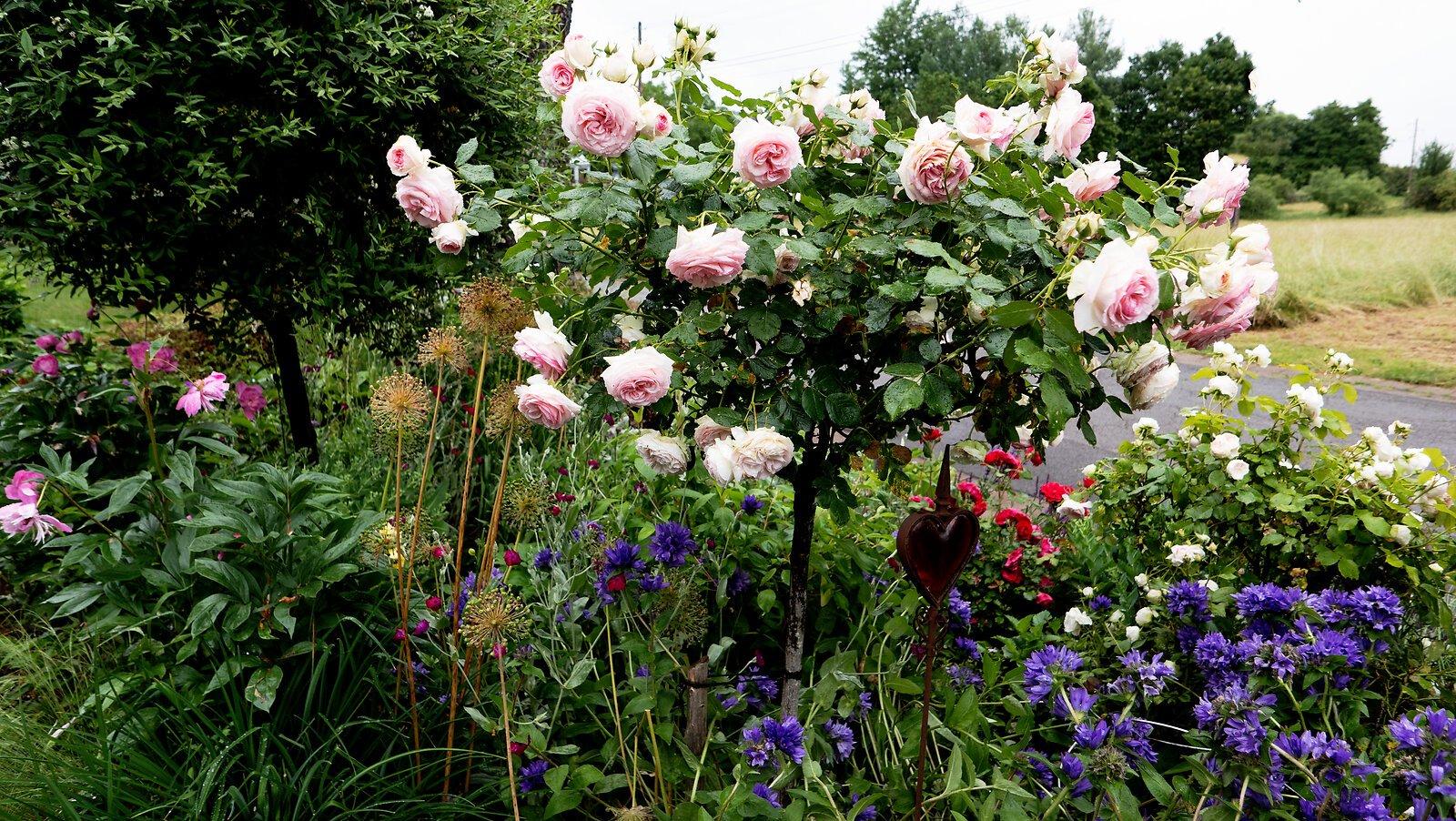 1schöner Garten.jpg