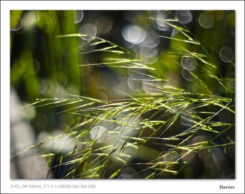 20110916-16-13-05_9160152.jpg