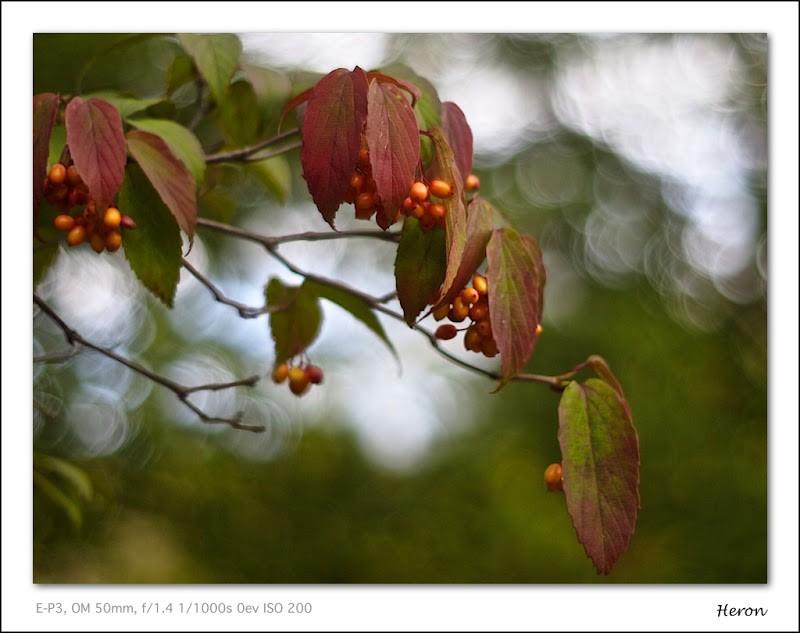 20110916-16-51-40_9160203.jpg