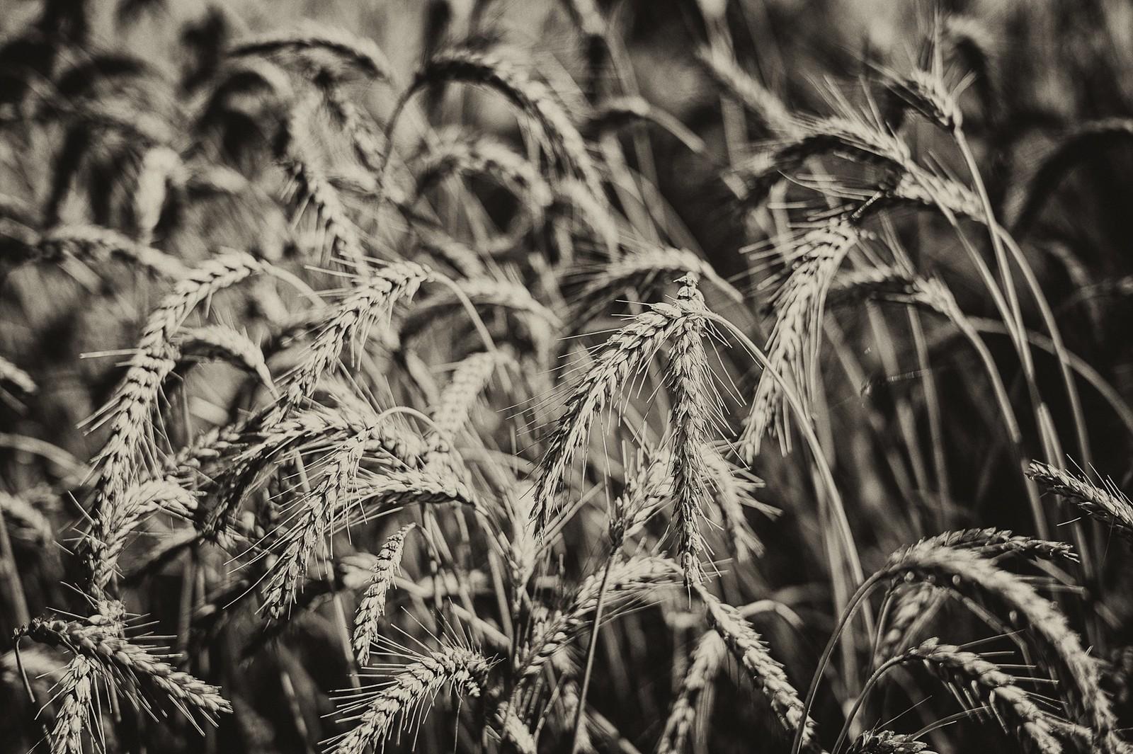 2012-Varia_Leica_2012-07-24_11-44-58_00962-Edit-X3.jpg