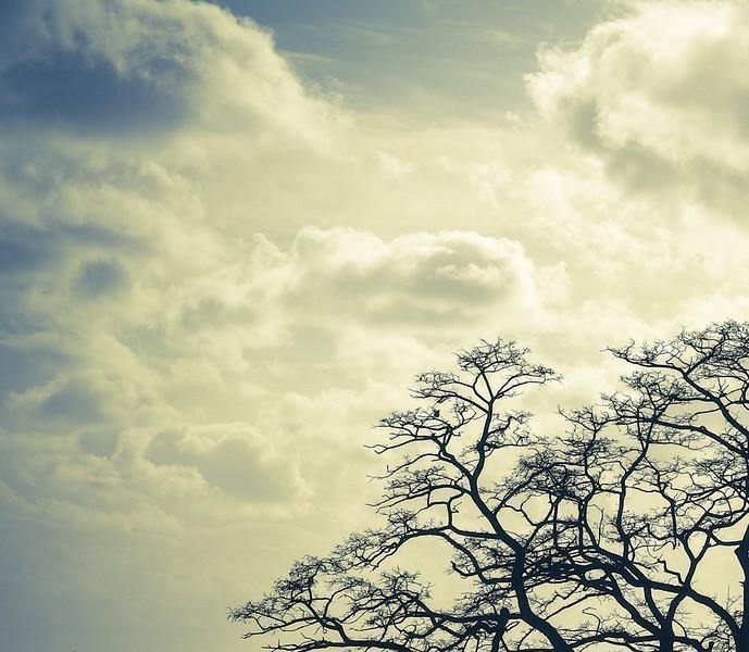 20140213_Tree-L.jpg