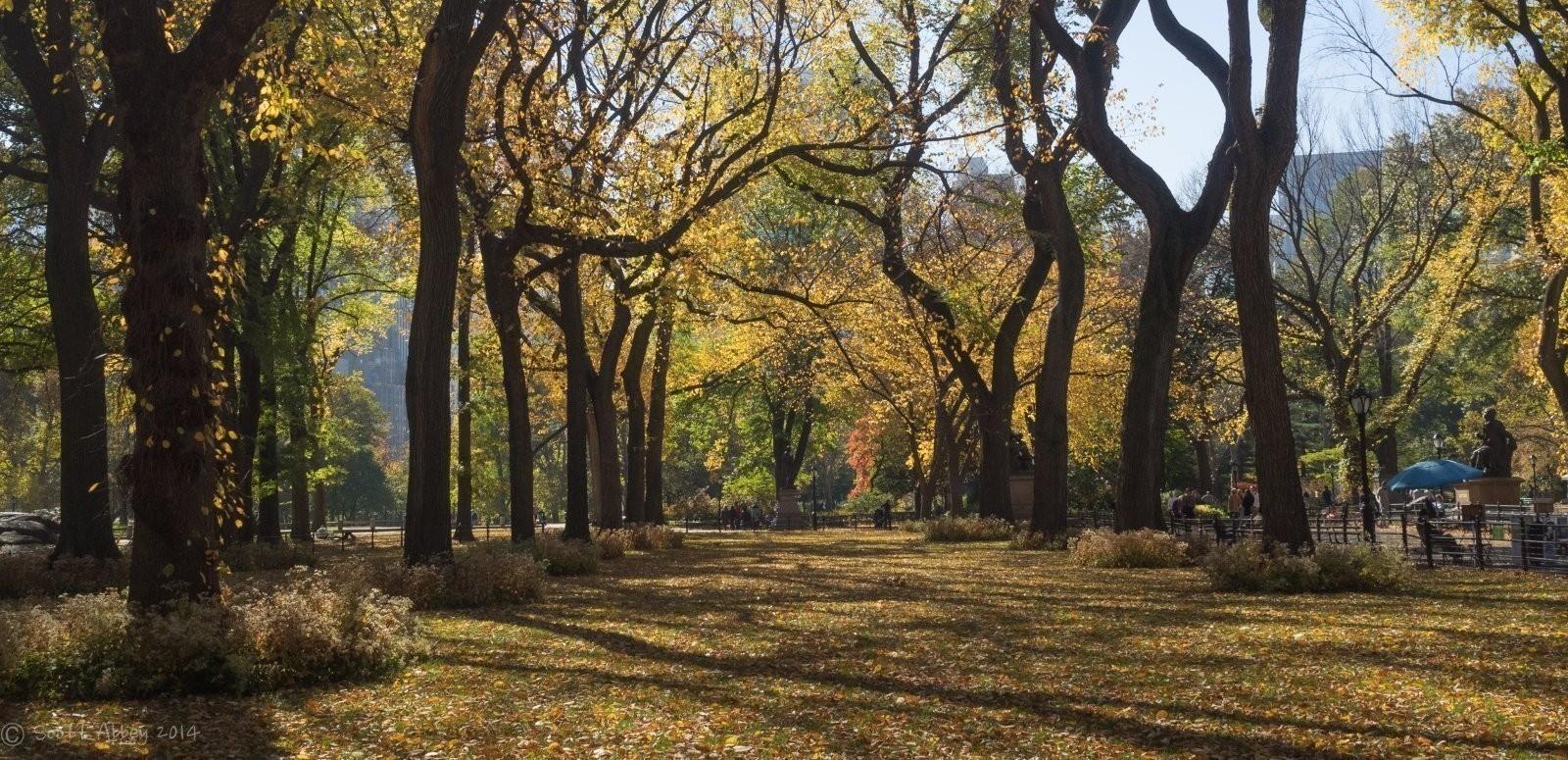 20151103 Central Park _SGA0008.jpg