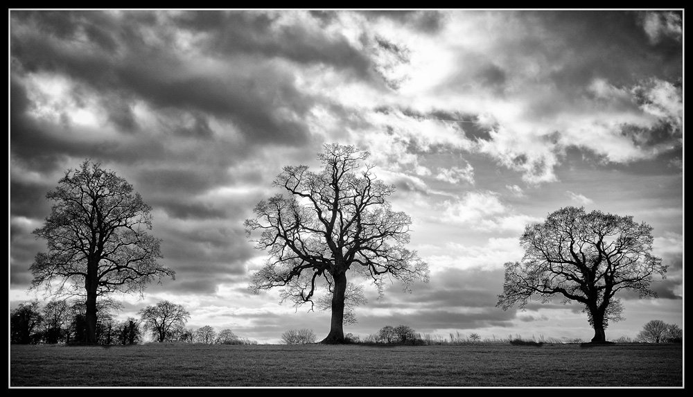 3_trees_SFX.jpg