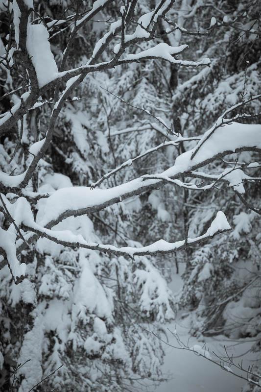 7Artisans - Snow.jpg
