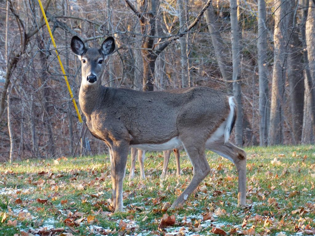 8_legged_deer_009_Medium_.JPG