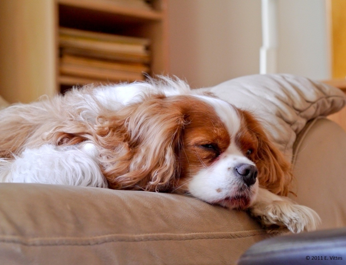 A little relaxation time at home ©.jpg