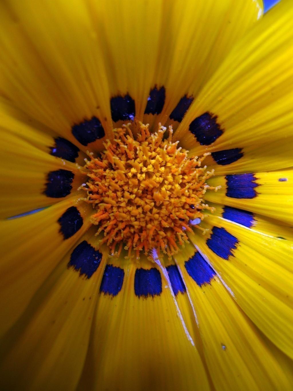 A630-flower.jpg