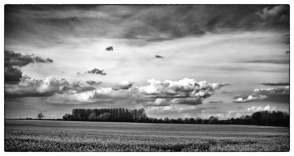 Across_the_field.jpg
