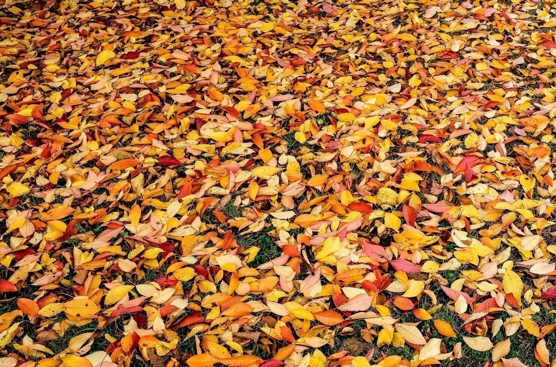 Autumn Leaves-2.jpg
