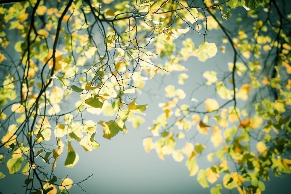 autumn_in_the_park-4.jpg
