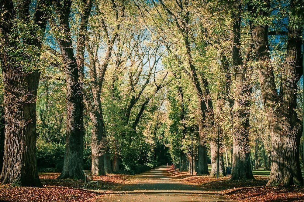 autumn_in_the_park-5.jpg