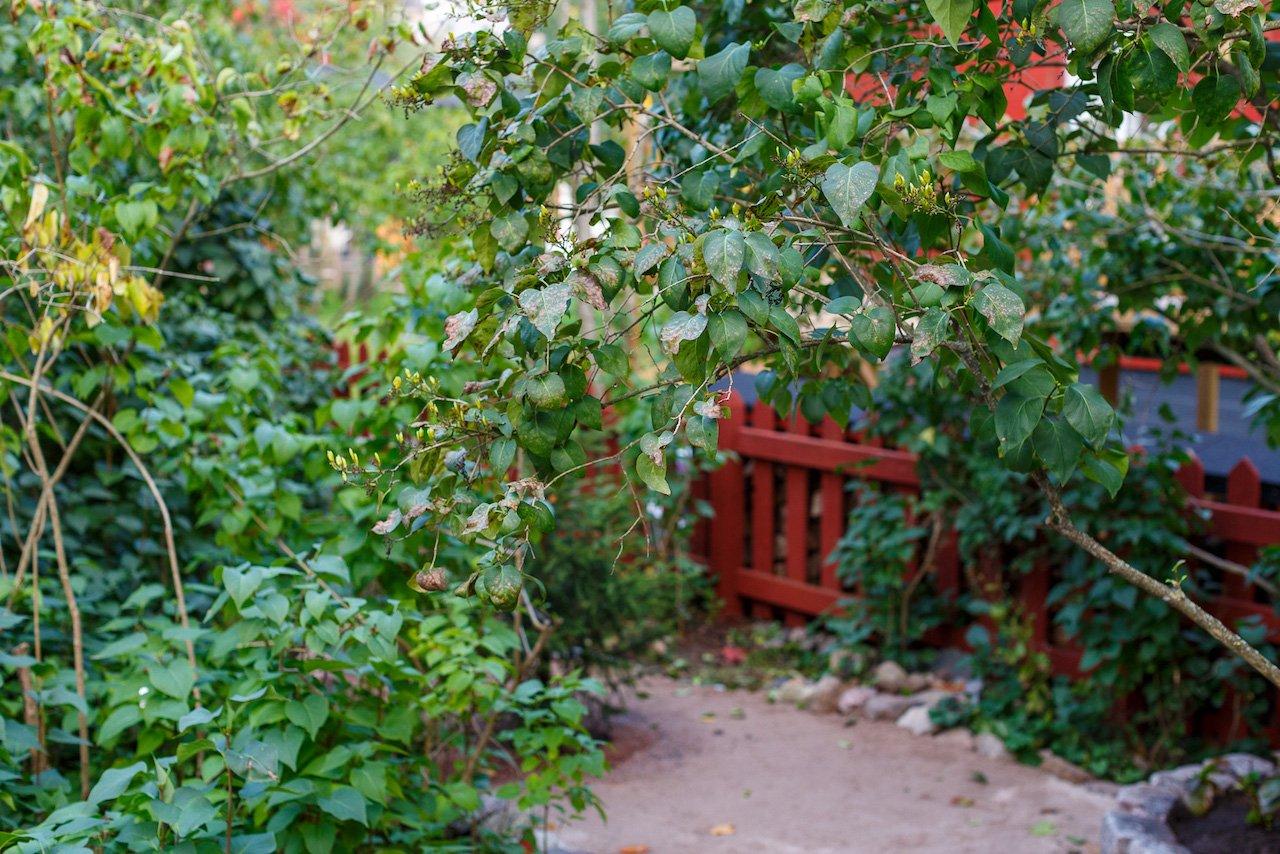 AutumnTree_005_Canon_EOS_5D_Mark_III_EF50mm_f-1.2L_USM.jpg