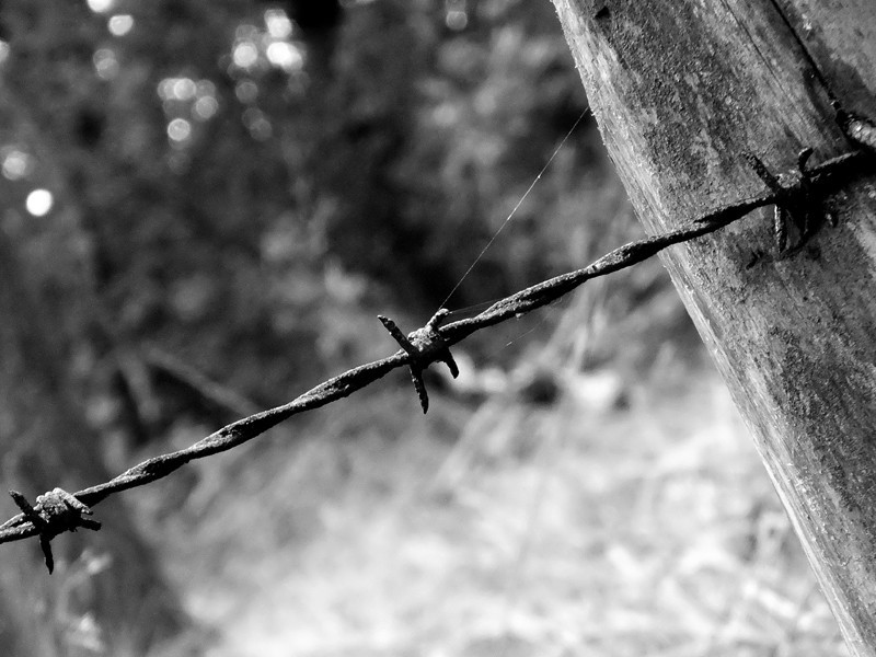 Barbed_Wire_2_800.jpg