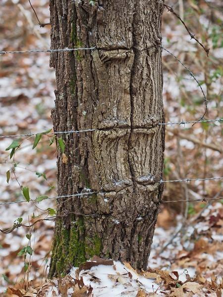 barbedtree-L.jpg