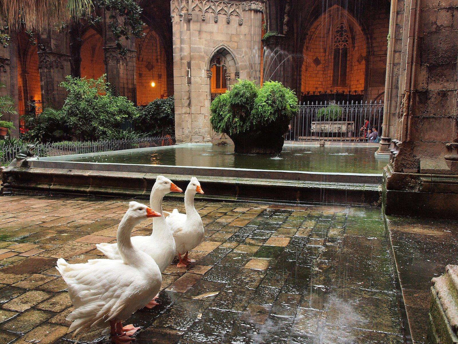 Barcelona_ Cathedral of Santa Eulalia (5).jpg