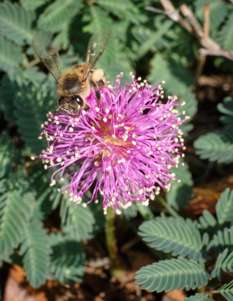 Bee on weed.jpg