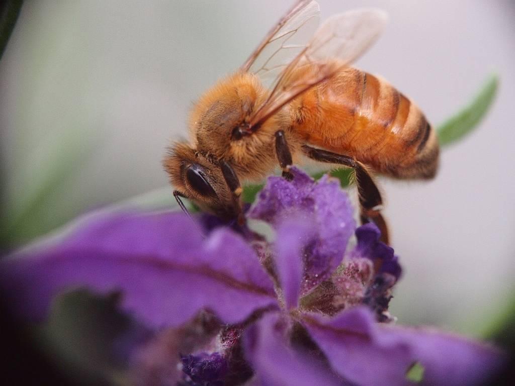 Bee-small.jpg
