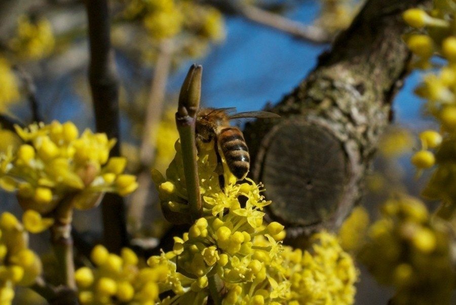 Bee_2.jpg