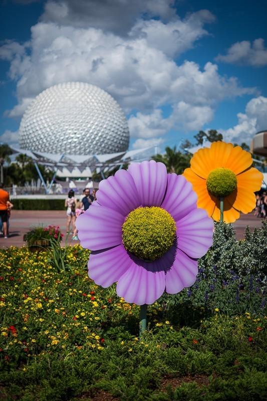 Big Flowers at Disney.jpg
