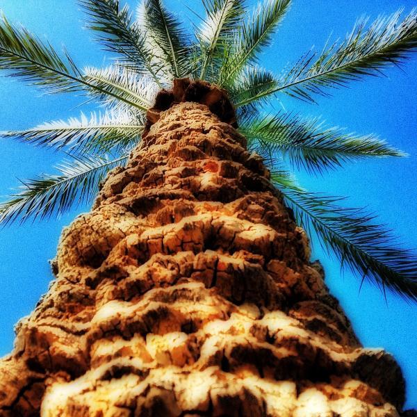 big_tree.jpg