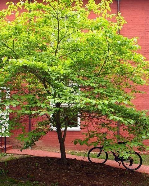bike-and-tree-L.jpg