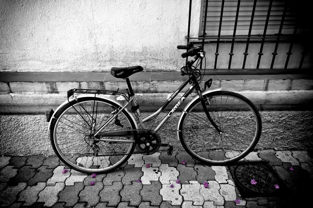 bike-petals-sc.jpg