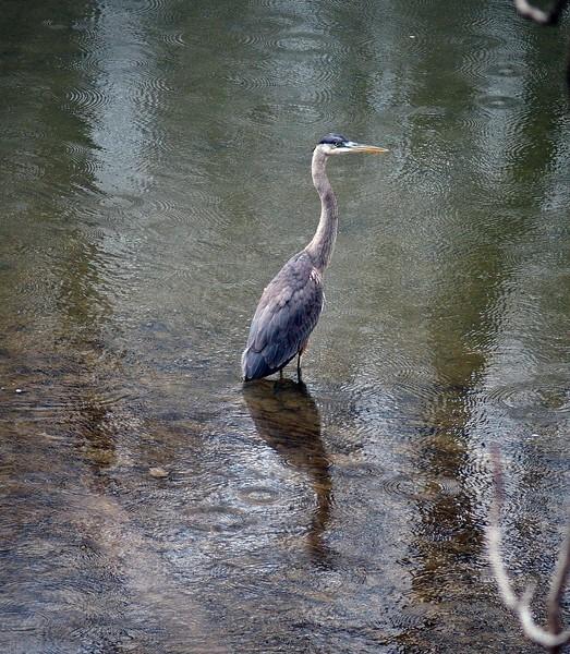 bird88-L.jpg