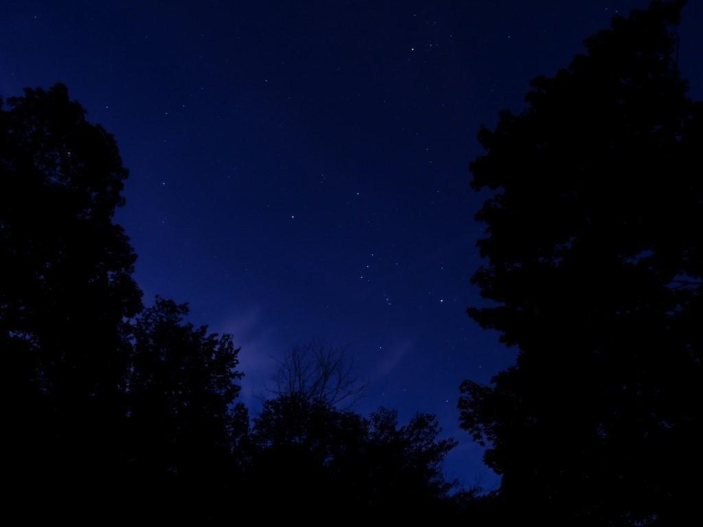 birdfeeder_and_starry_night_009_Medium_.JPG