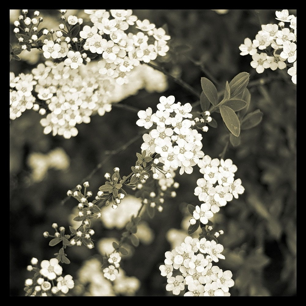blitz-blooming1-1k.jpg