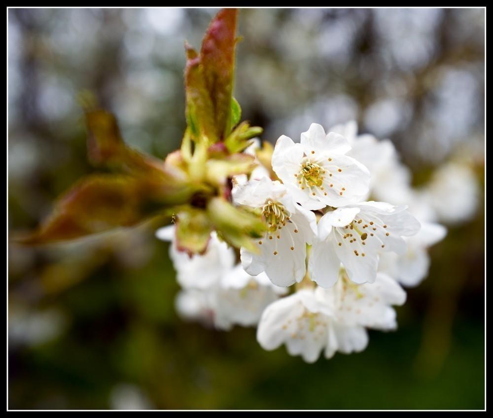Blossom_1.jpg