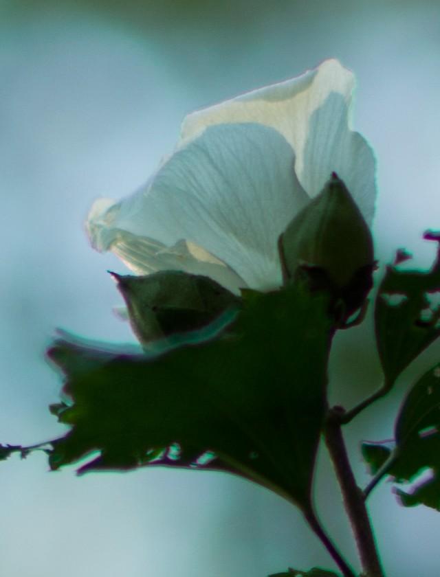 blossom_100crop.jpg