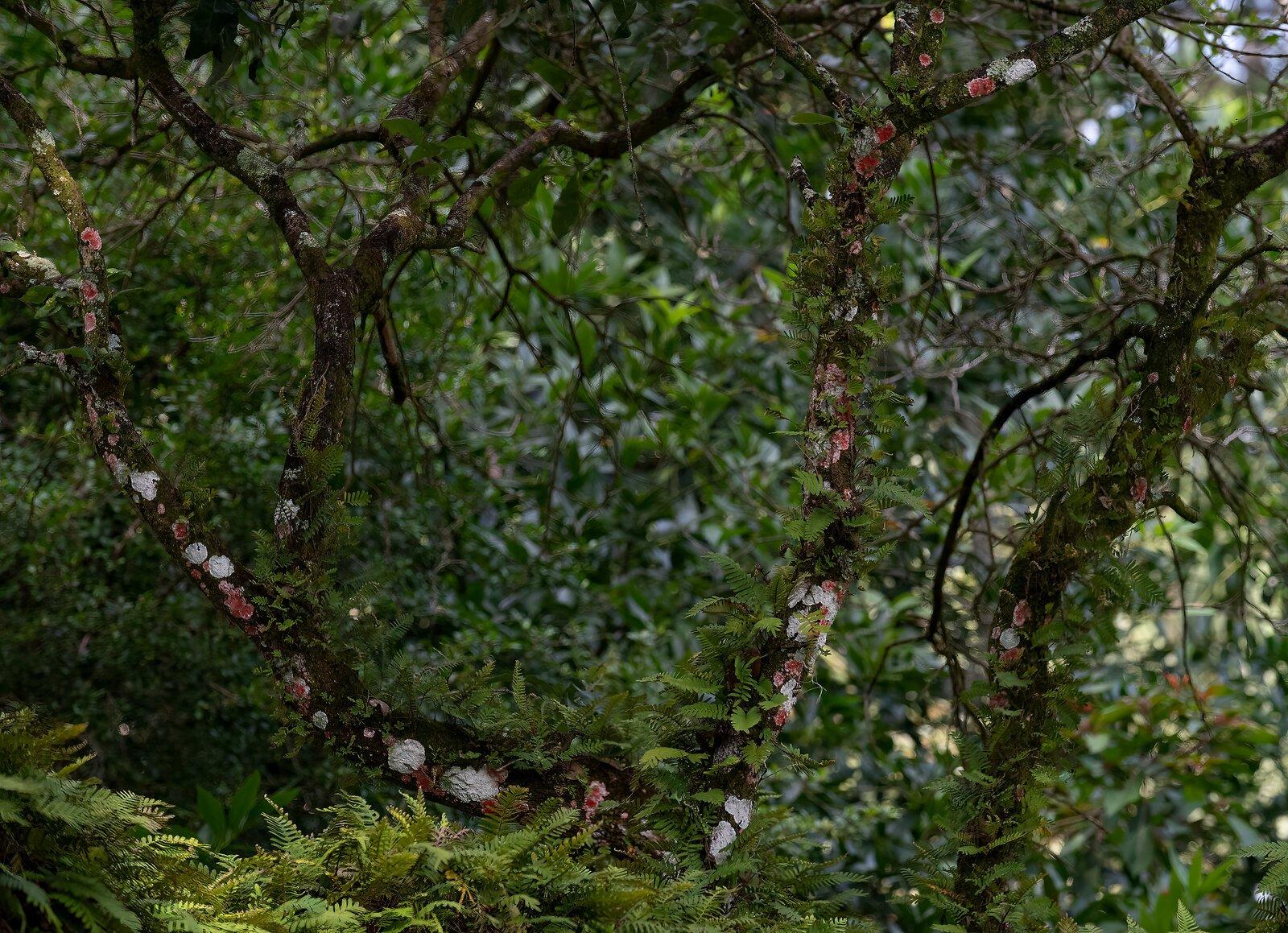 Bok Tower lichens.jpg