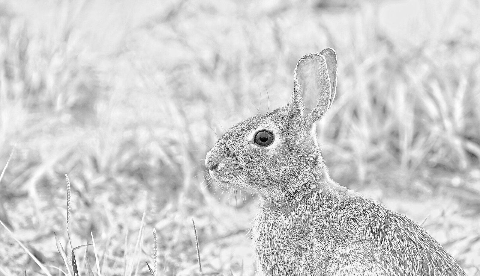Bunny portrait..jpg