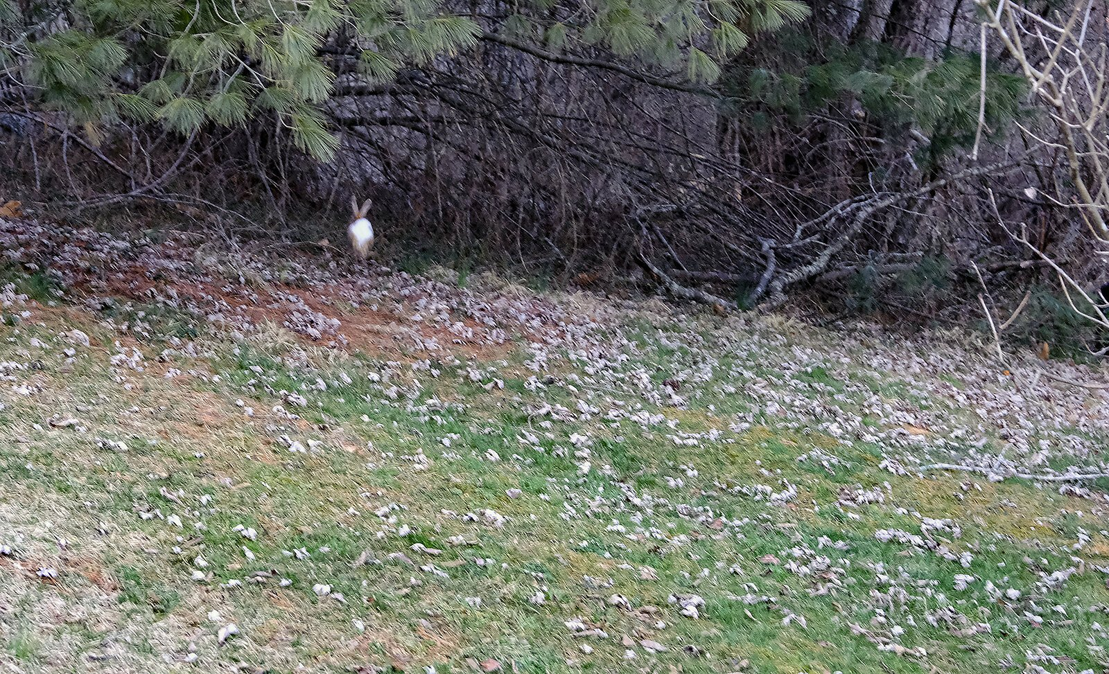 bunnybutt.jpg