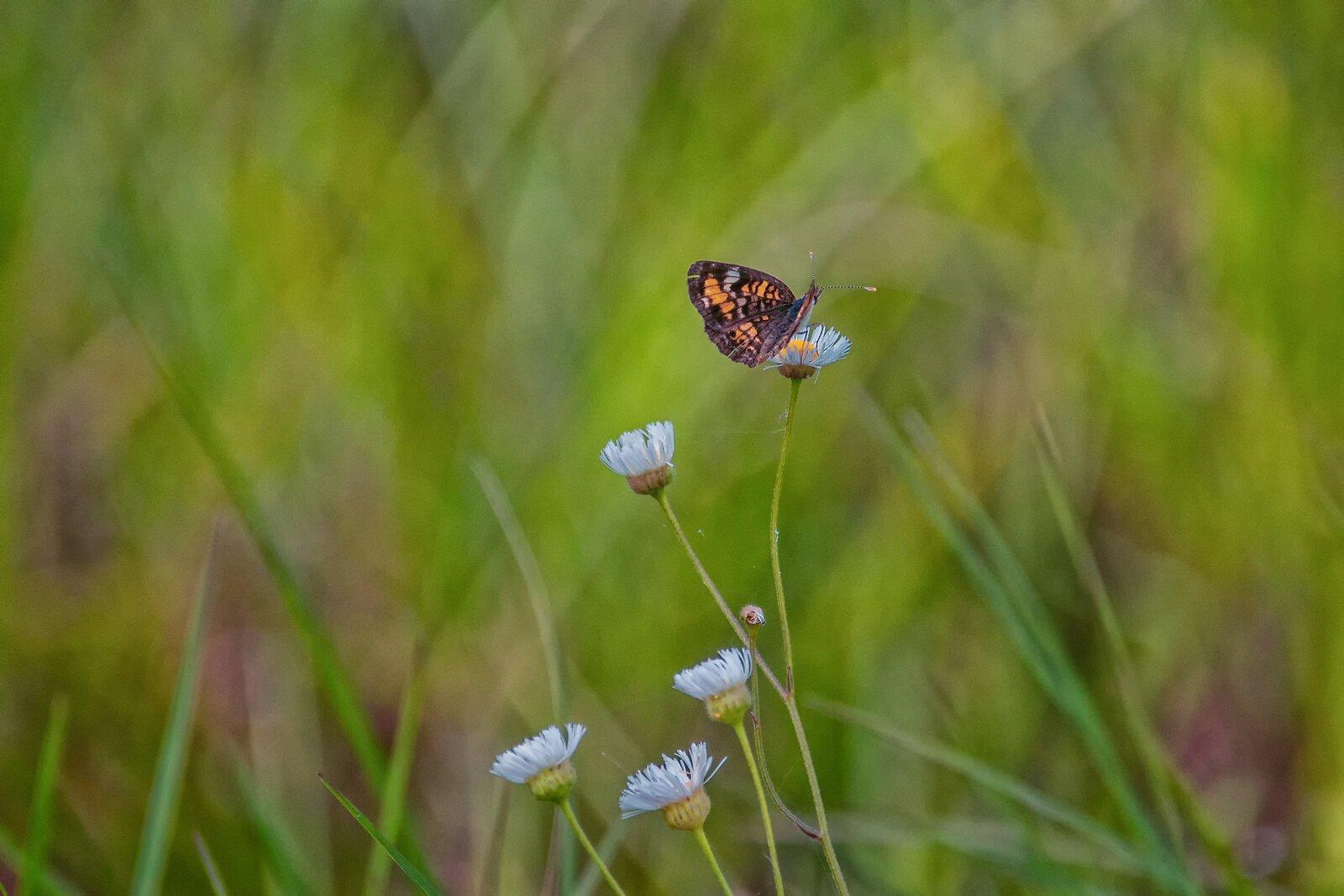 Butterfly 4.jpg