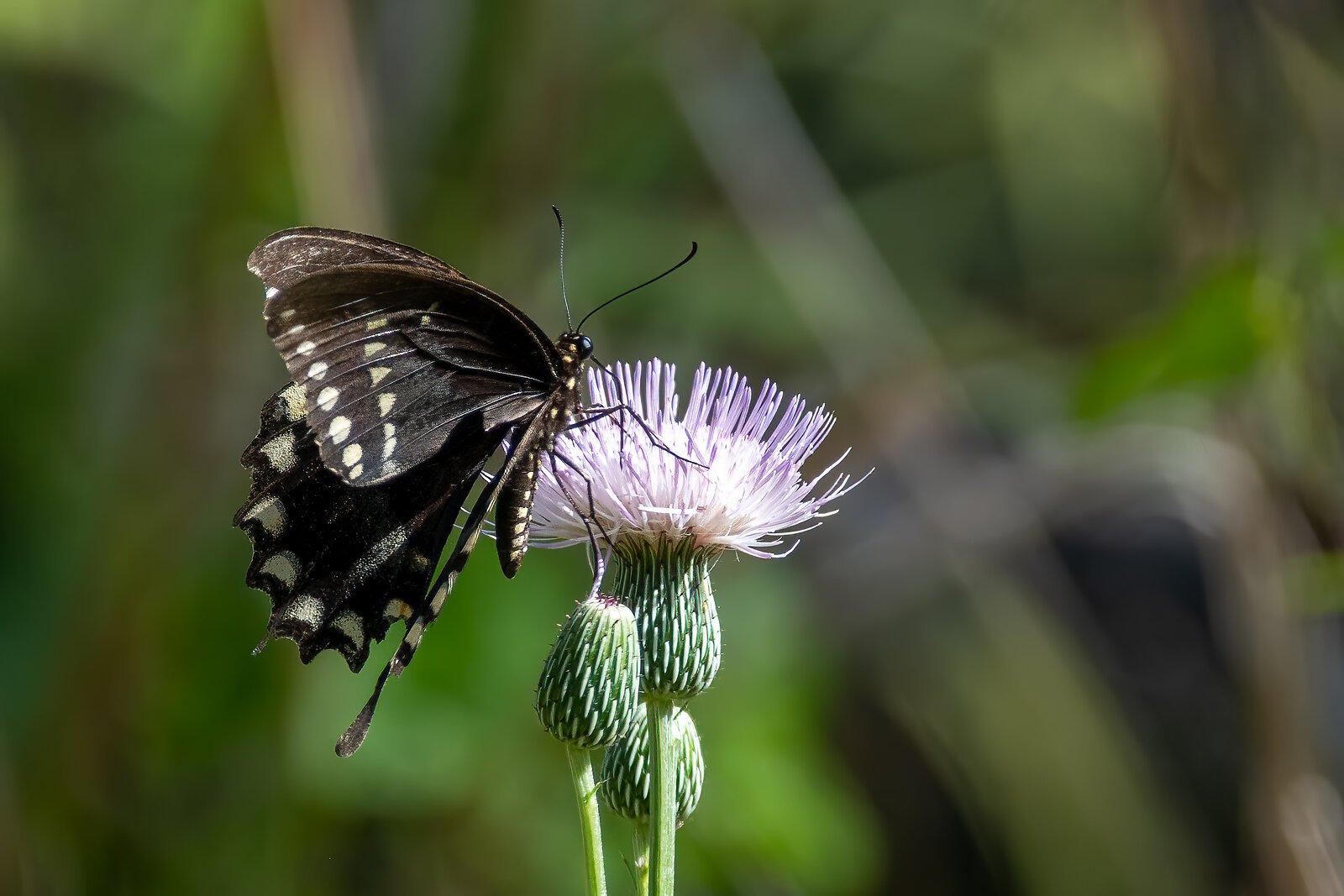 Butterfly last.jpg