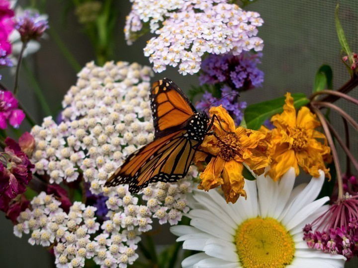 Butterfly-on-flower-LR_web.jpg
