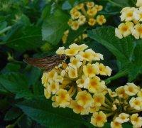Butterfly01_s.jpg