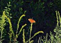 Butterfly05_s.jpg