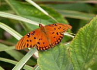 Butterfly06_s.jpg