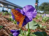 Butterfly07_s.jpg