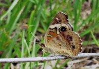 Butterfly08_s.jpg
