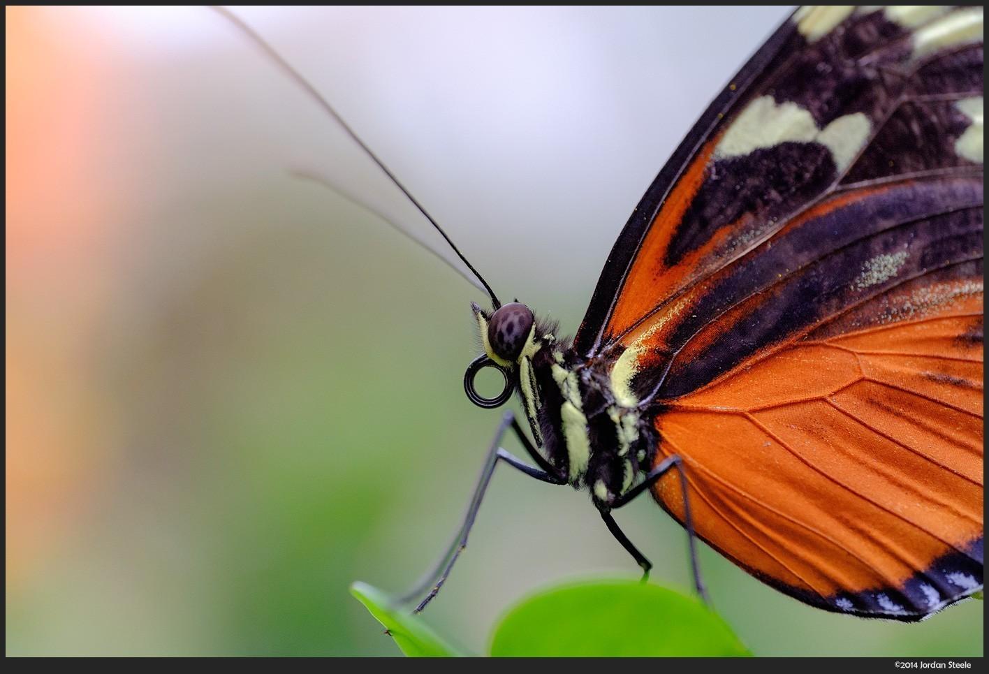 butterfly2_z.jpg