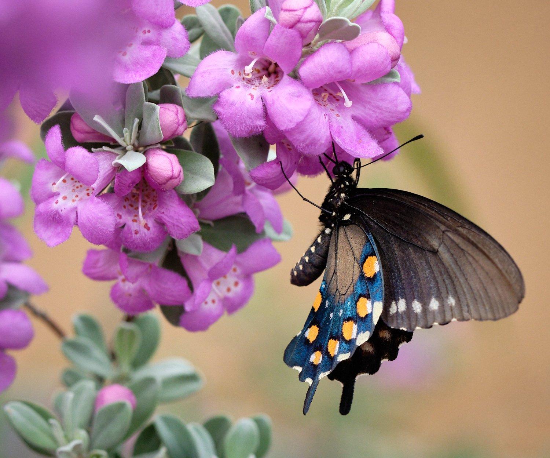 Butteryfly 2.jpg