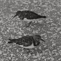 Bw_Birds00_s.jpg