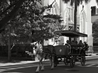Bw_Charleston_Downtown14_s.jpg